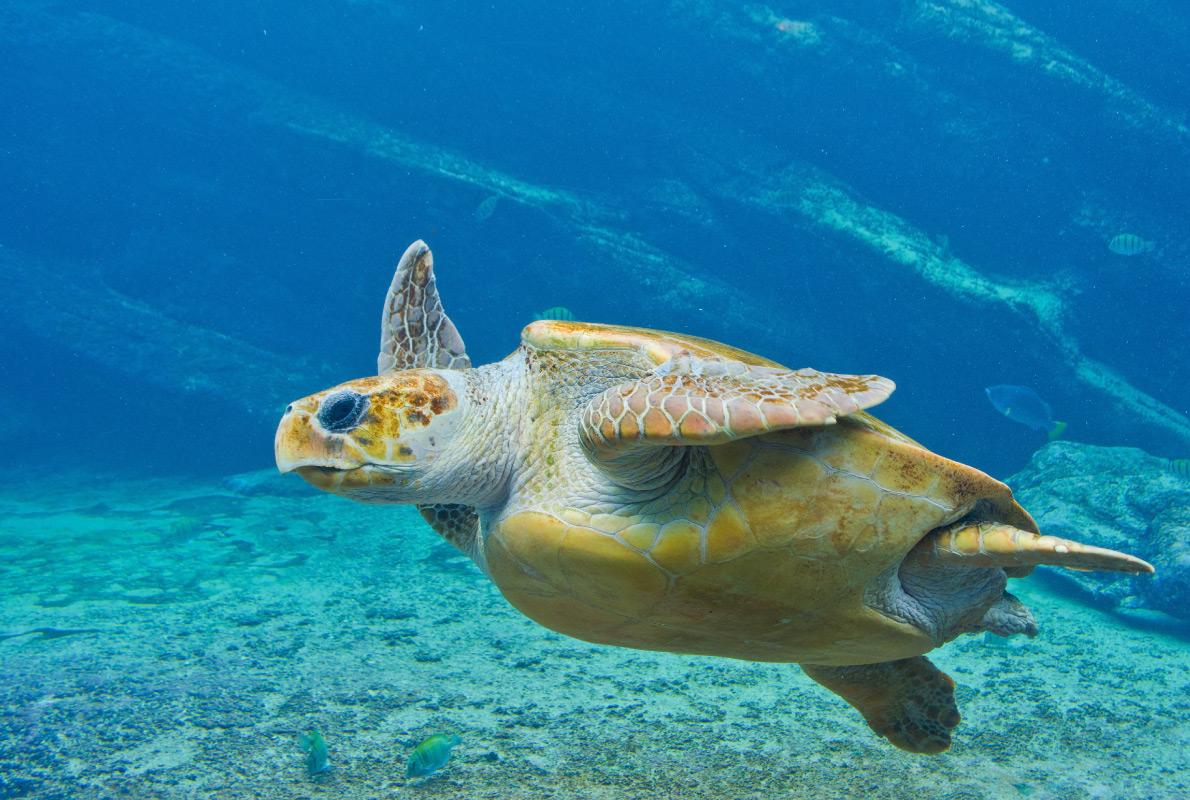 Tenerife - Best diving destinations in Europe - Copyright Jan-Nor Photography - European Best Destinations