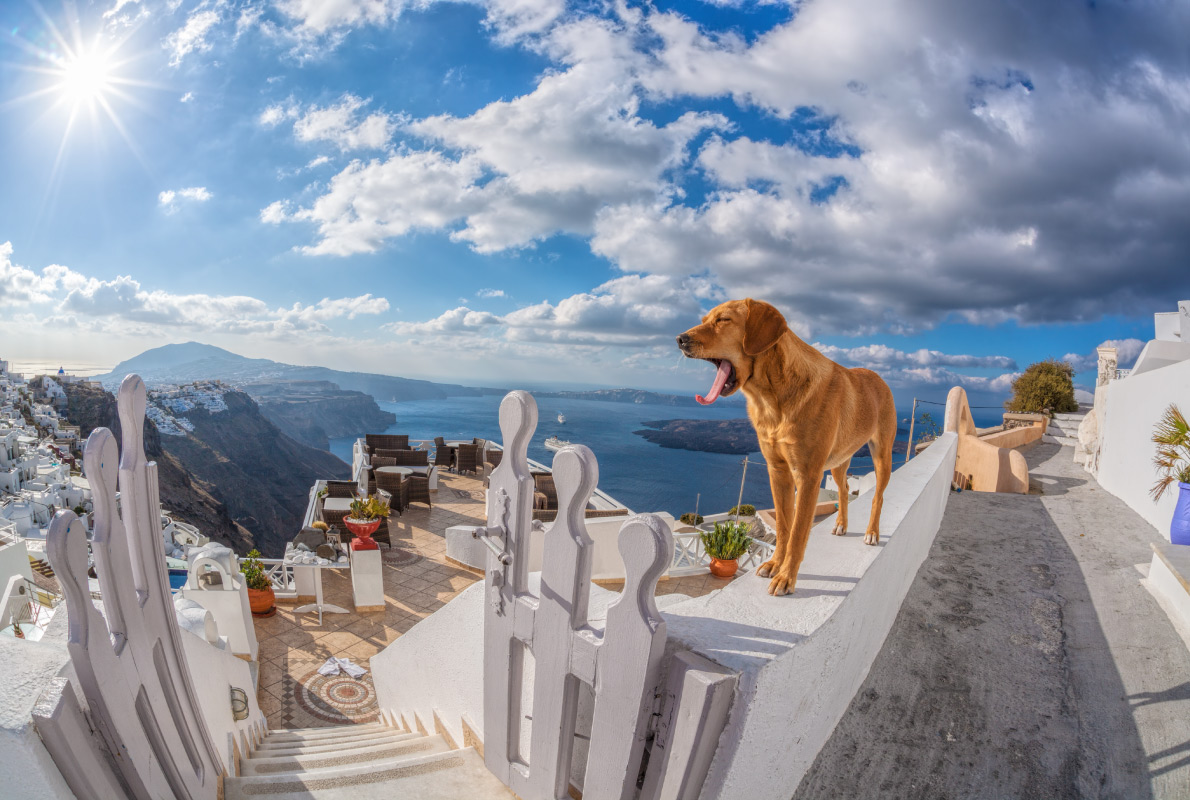 Santorini  - Best dog friendly destinations in Europe - Copyright Samot - European Best Destinations