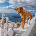 best-dog-friendly-destinations-in-europe