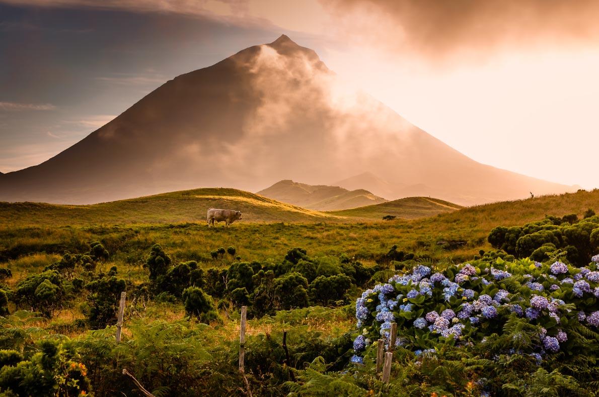 Nature wonders in Portugal - Pico Copyright  Robert van der Schoot  - European Best Destinations