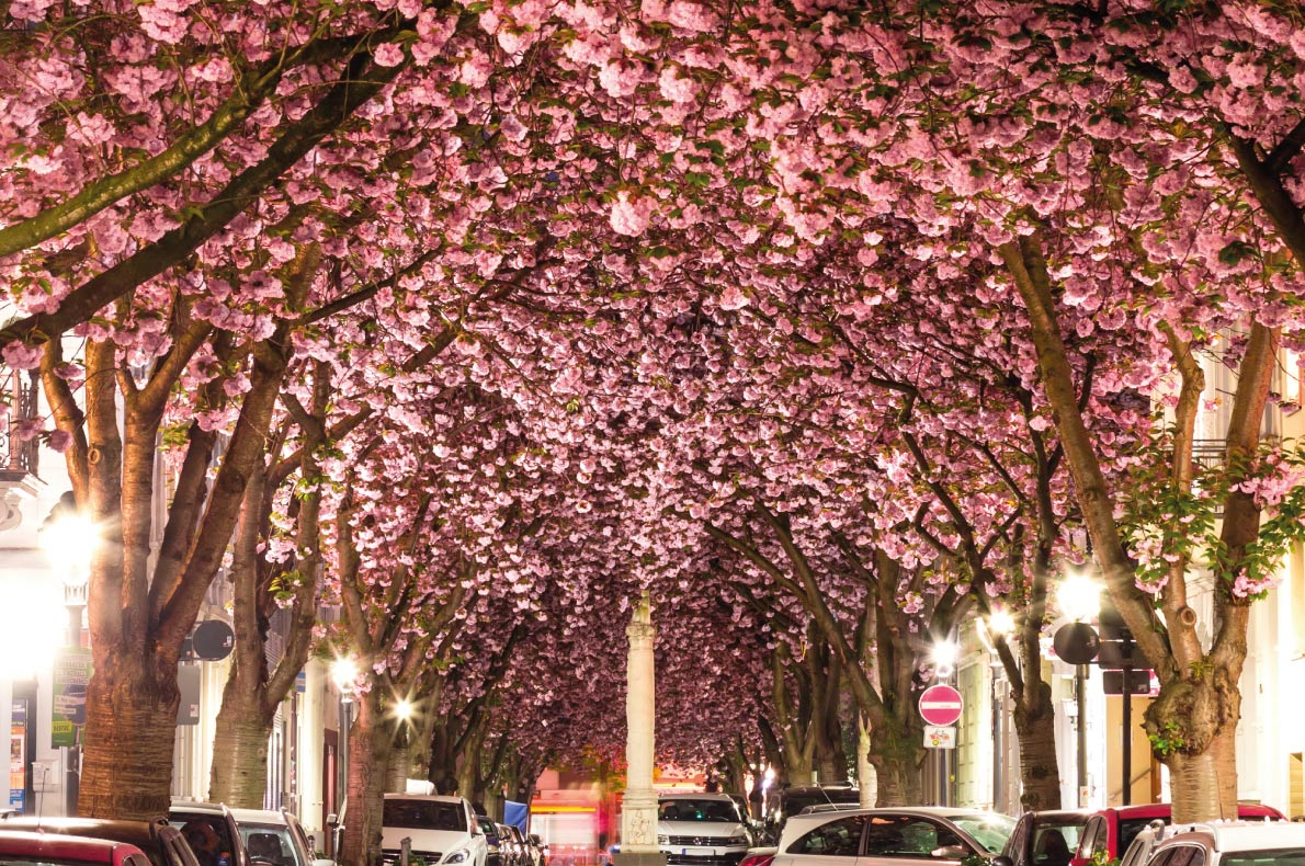 Best things to do in Germany - Bonn Blossoming - Copyright HeadSpinPhoto - European Best Destinations
