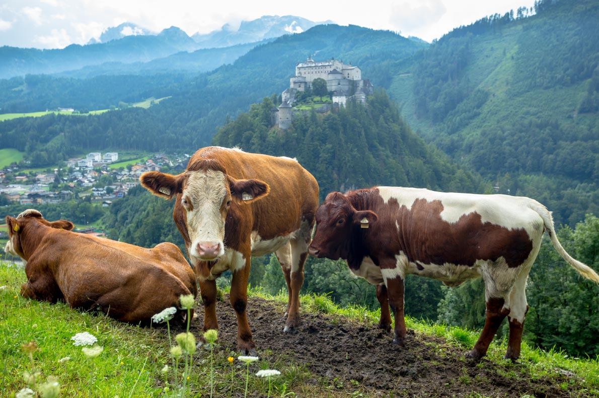 Best castles in Austria - Hohenwerfen Castle  - Copyright  SaKaLovo - European Best Destinations