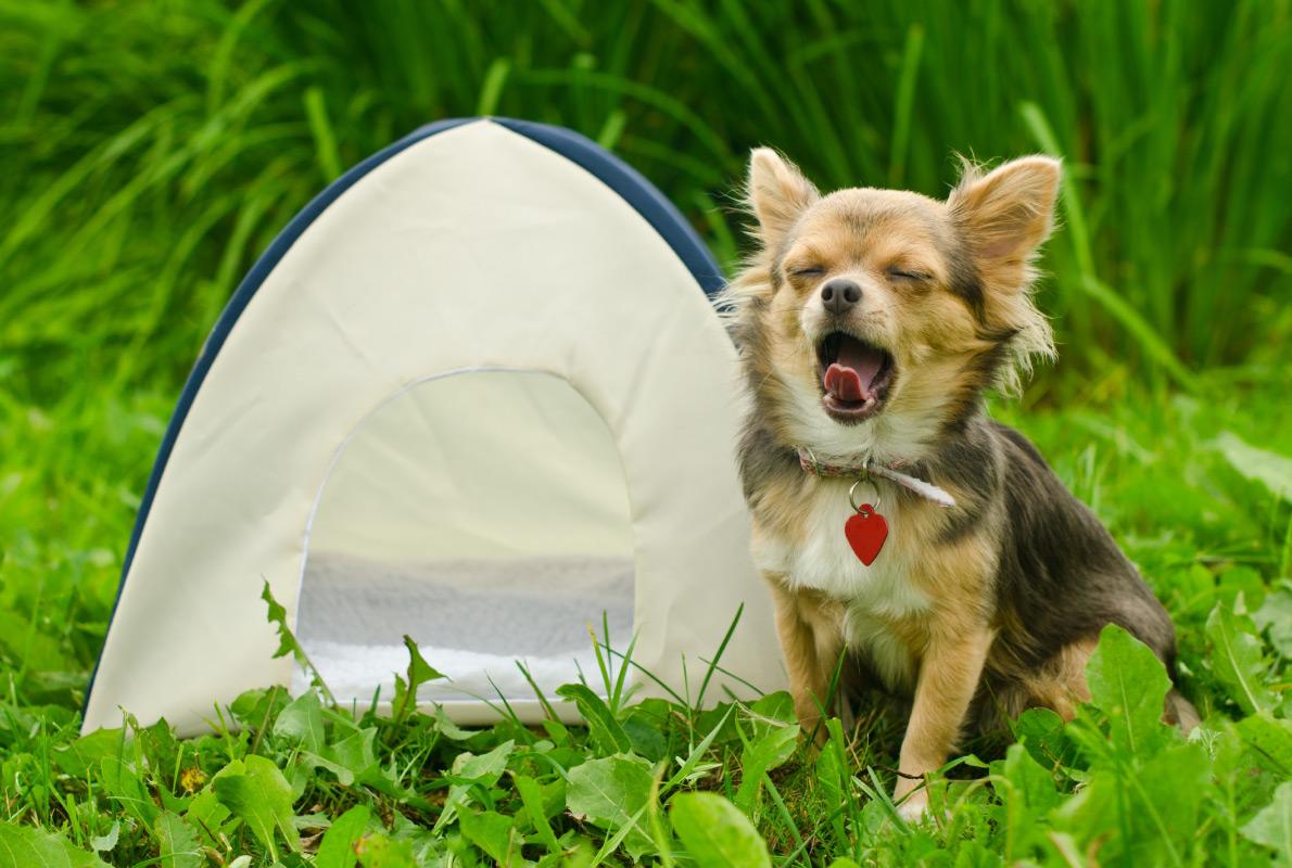 Wallonia - Best dog friendly destinations in Europe - Copyright Vitaly Titov - European Best Destinations