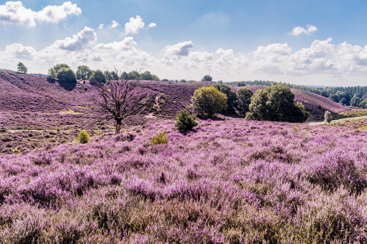 Best hidden gems in the Netherlands  - Copyright fokke baarssen - European Best Destinations