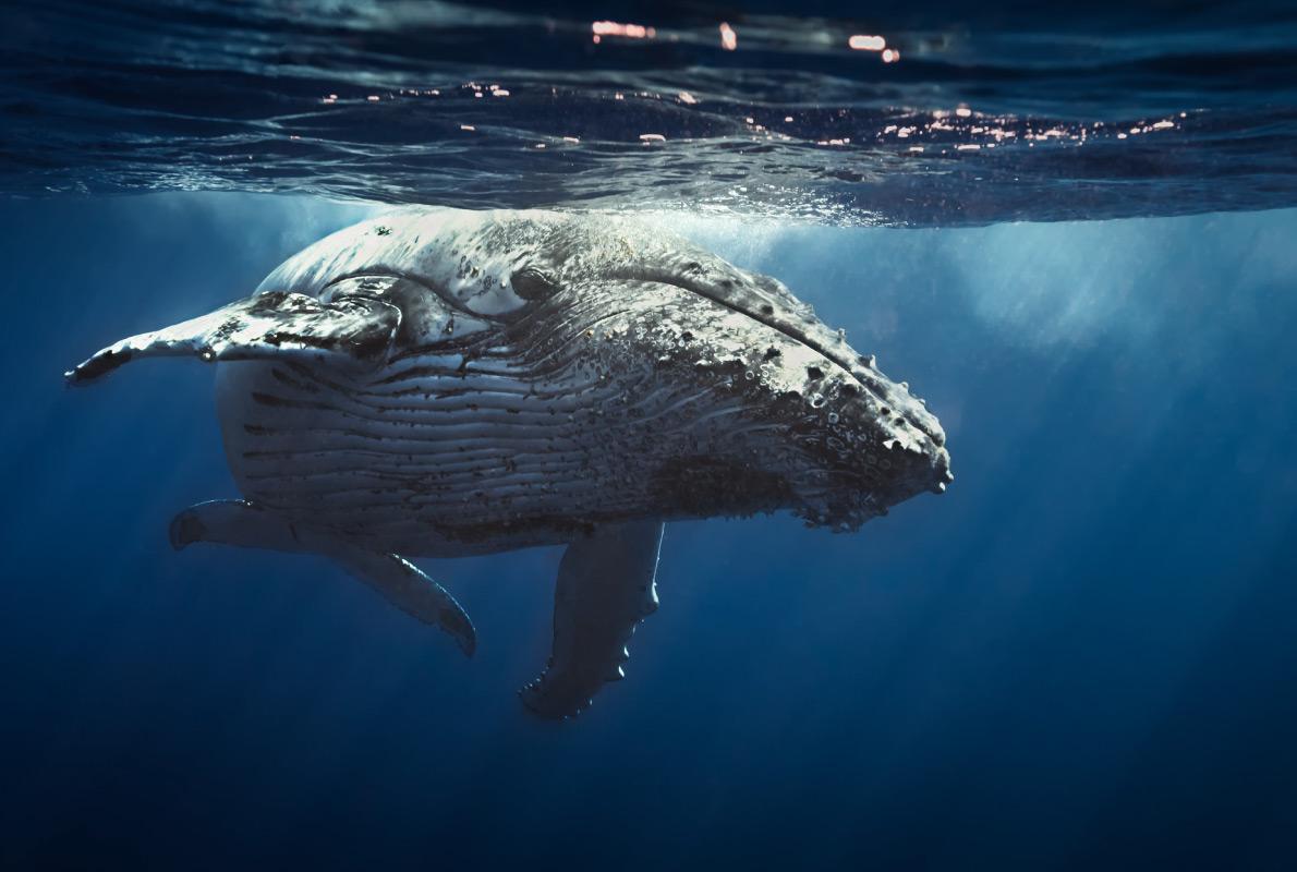 Azores - Best dolphins and whales destinations in Europe - Copyright Seb c'est bien - European Best Destinations