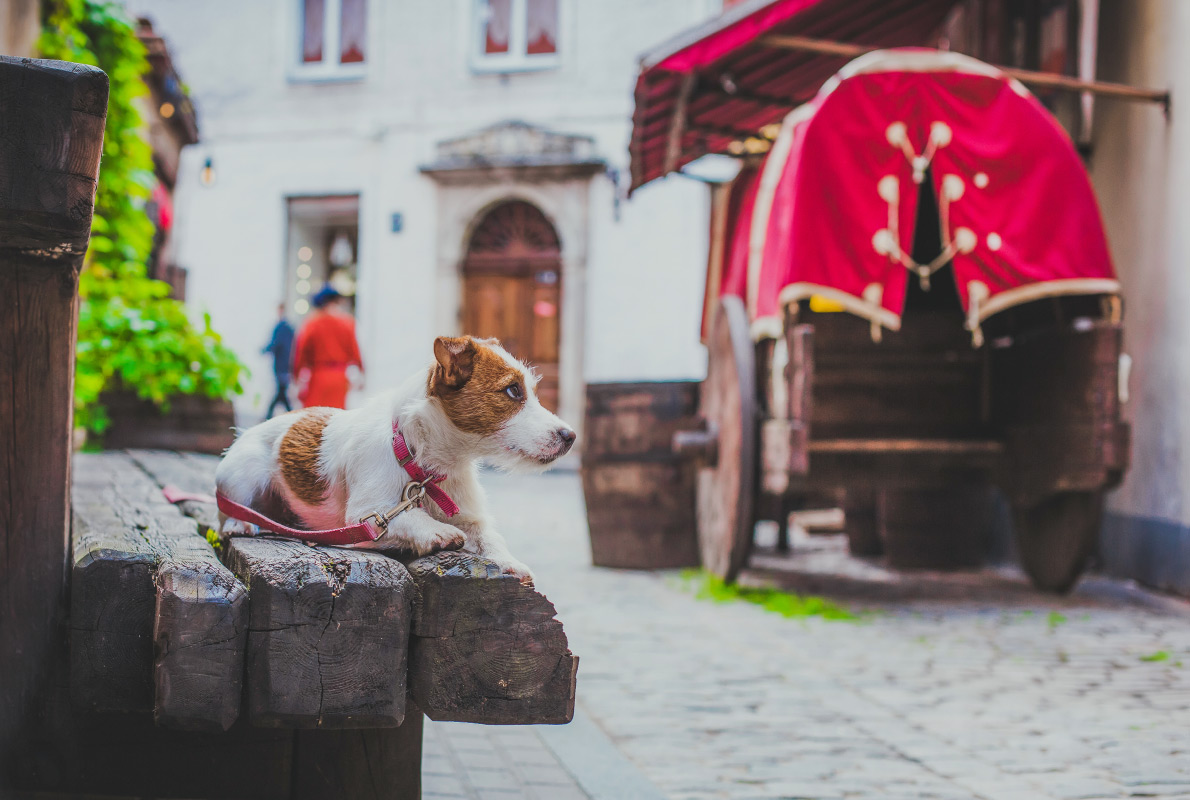 Riga - Best dog friendly destinations in Europe - Copyright dezi - European Best Destinations