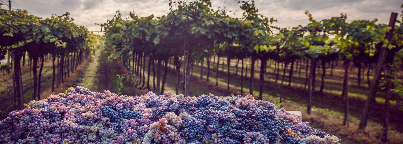 Best-Wine-Destinations-in-Europe