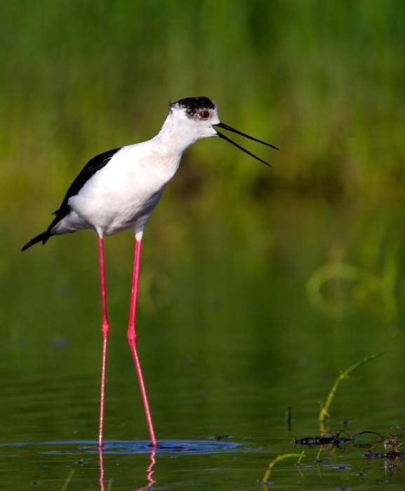 best-sustainable-destinations-for-birdwatching
