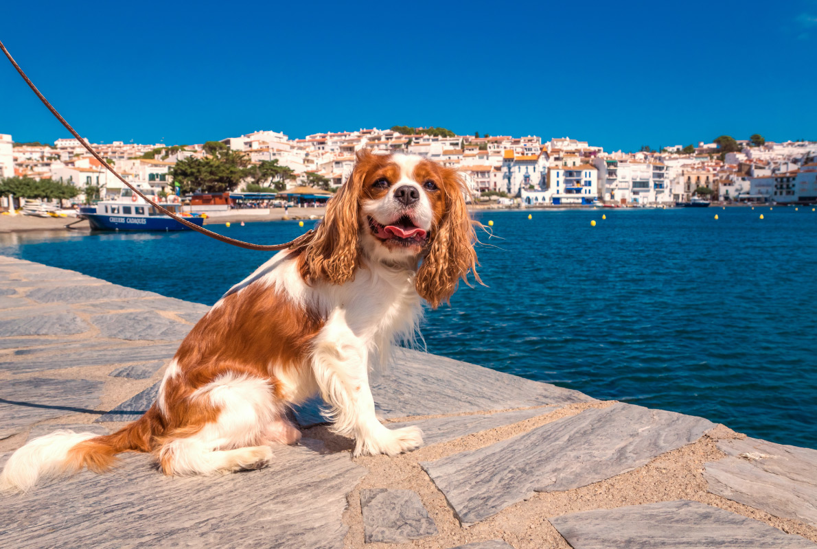 Cadaques - Best dog friendly destinations in Europe - Copyright LaMiaFotografia - European Best Destinations