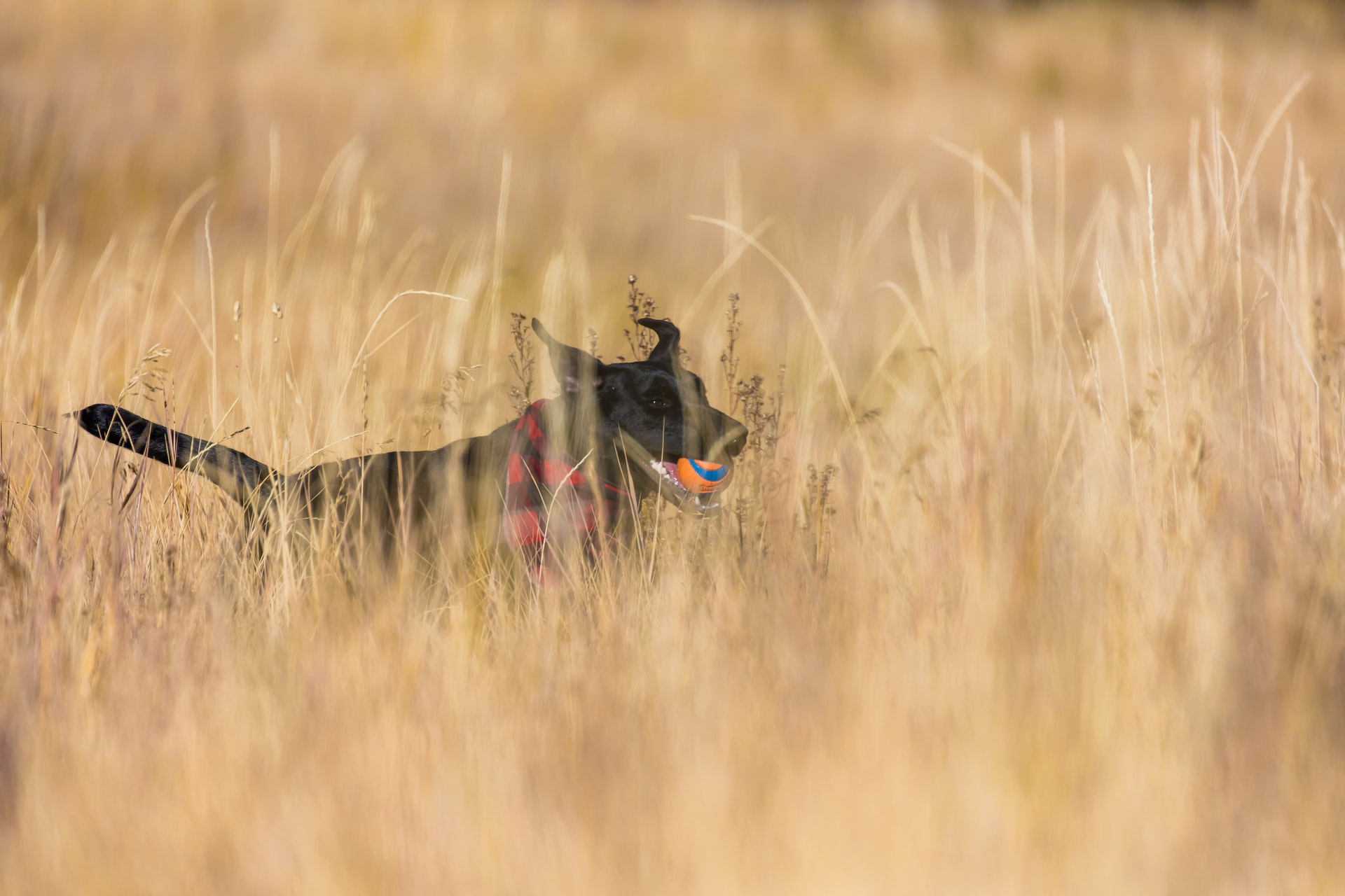 Warum ein Kornfeld gefährlich für Hunde und Katzen sein kann