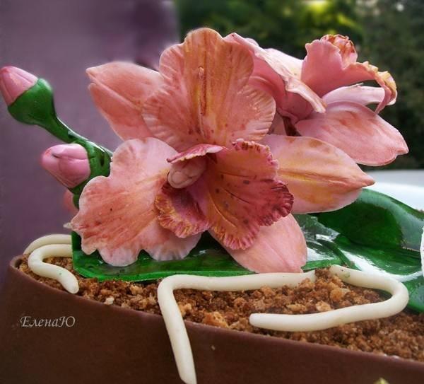 Орхидеи ручной работы, сахарная паста