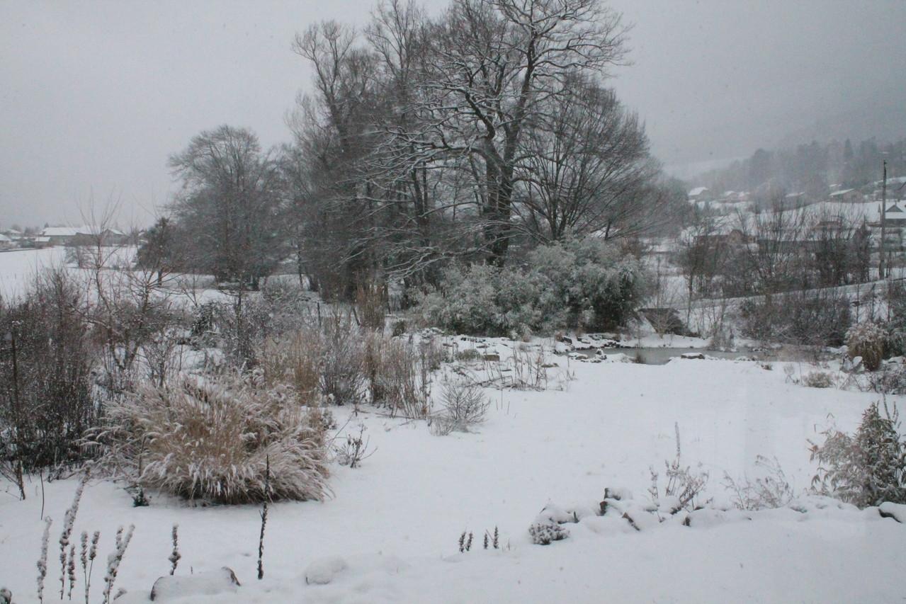 Chêne sous la neige. Photo P.Lamour
