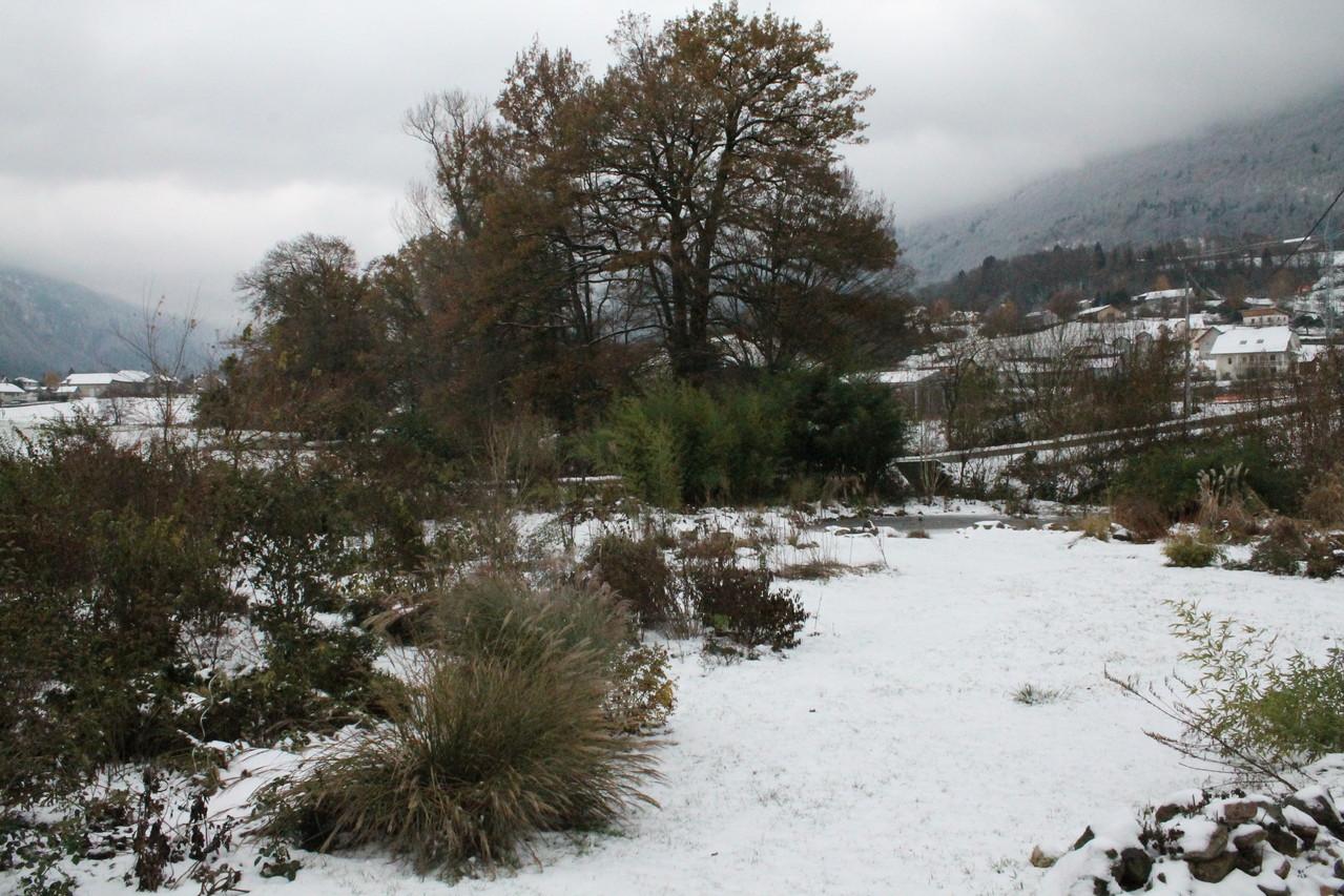 Chêne 1ere neige. Photo P.Lamour