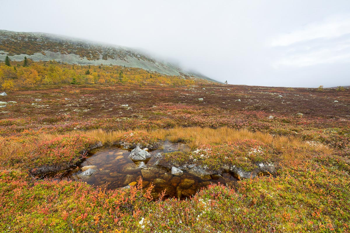 Herbst am Idre Fjell