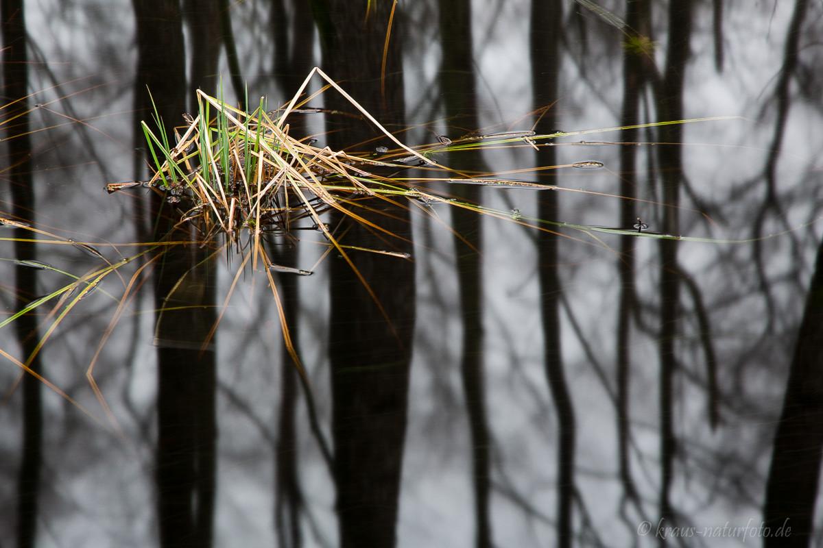 Detail im Erlenbruch, Darßer Wald