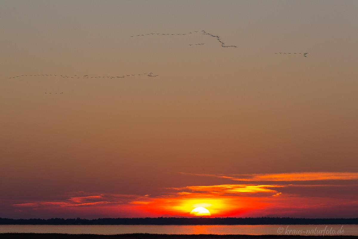Sonnenuntegang über dem Bodden