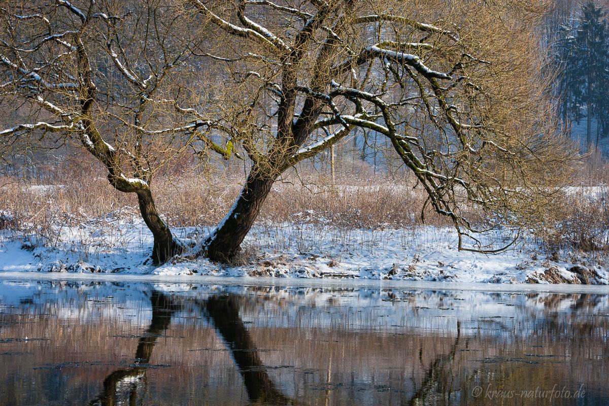 Winter an der Sieg bei Dattenfeld