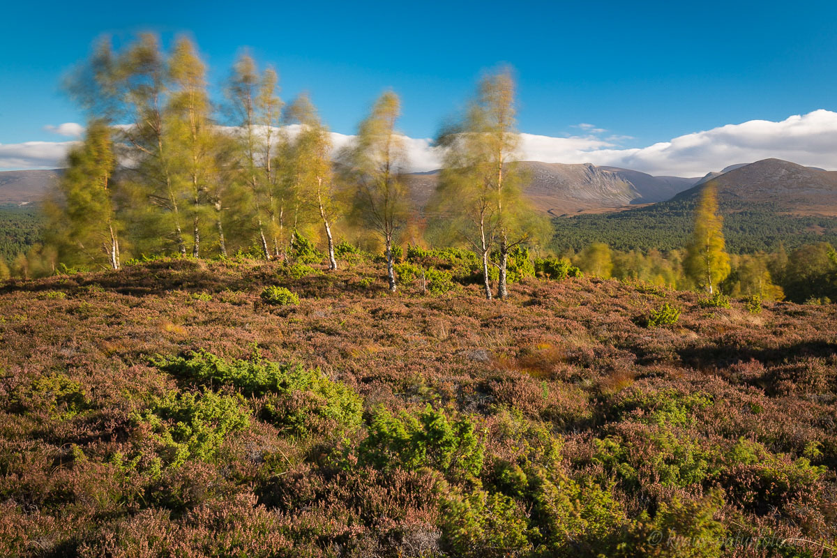 stürmischer Herbtstag in den Cairngorm Mountains