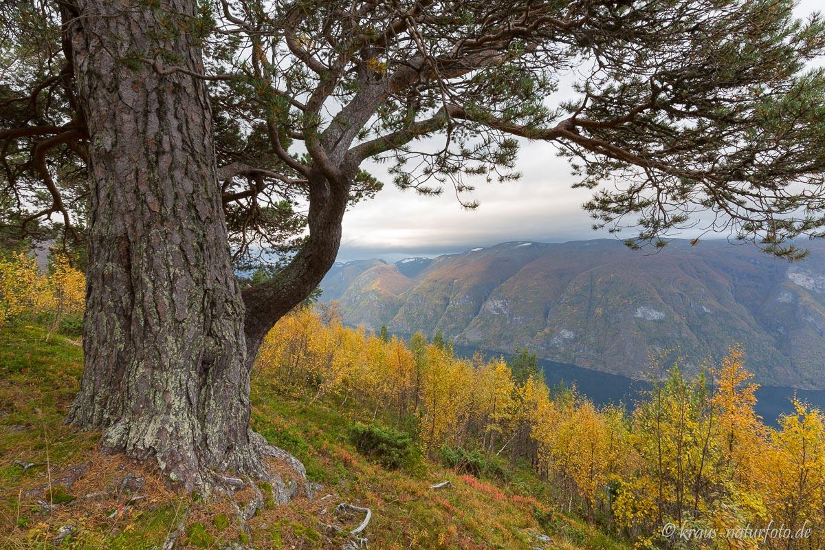 Über dem Aurlandsfjord