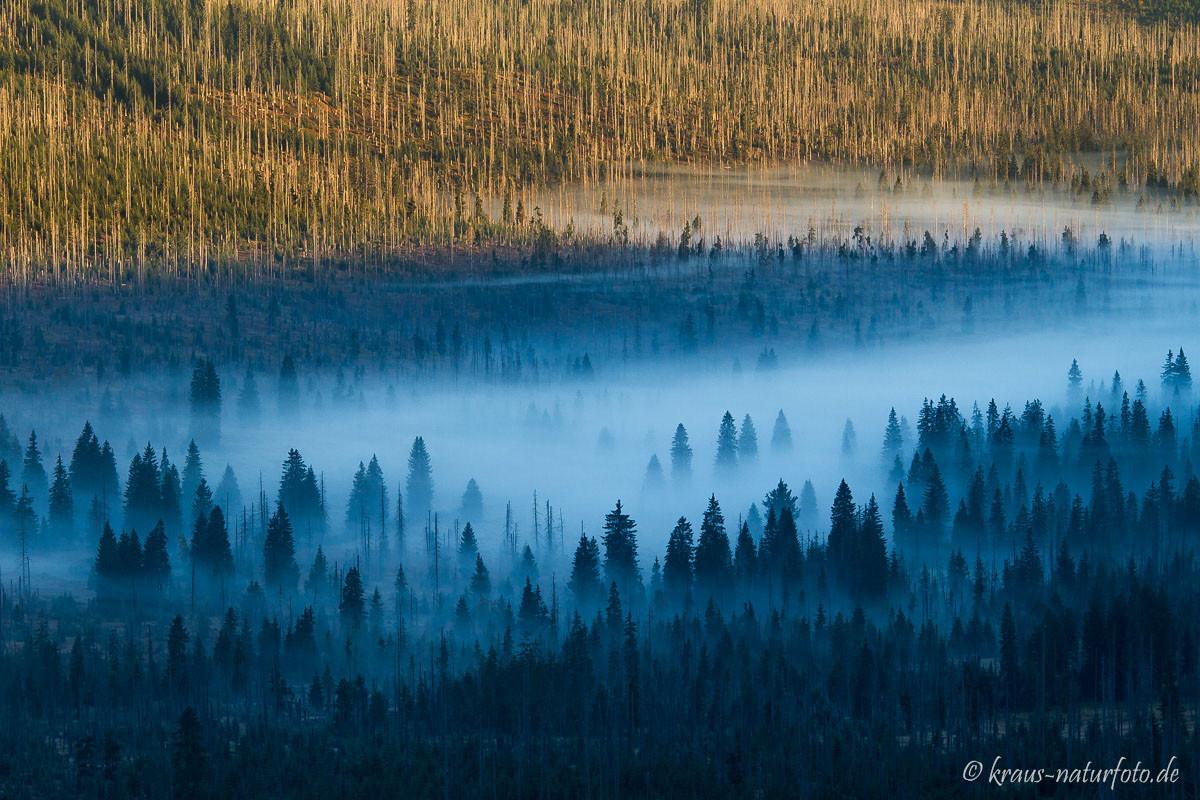 Morgennebel in den Wäldern unter dem Lusengipfel