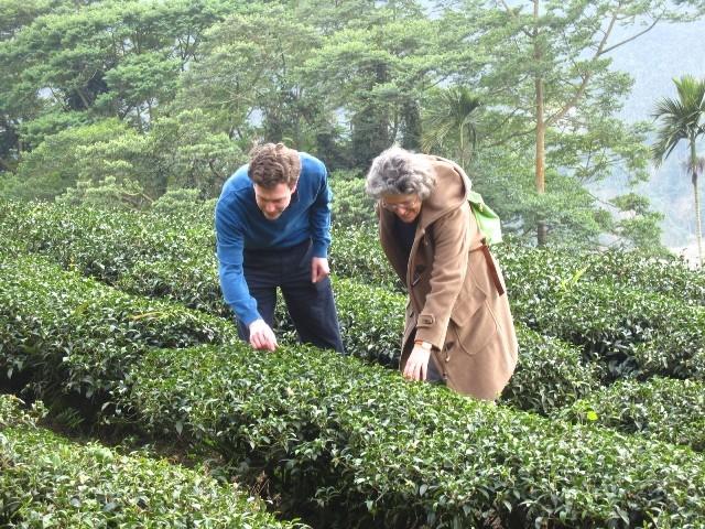 羽唐 - 德國外賓參觀茶園