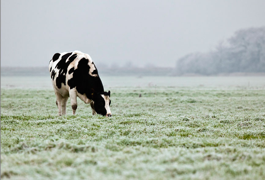 'Winter in Friesland' - Weekprijs Franeker Courant - 2011