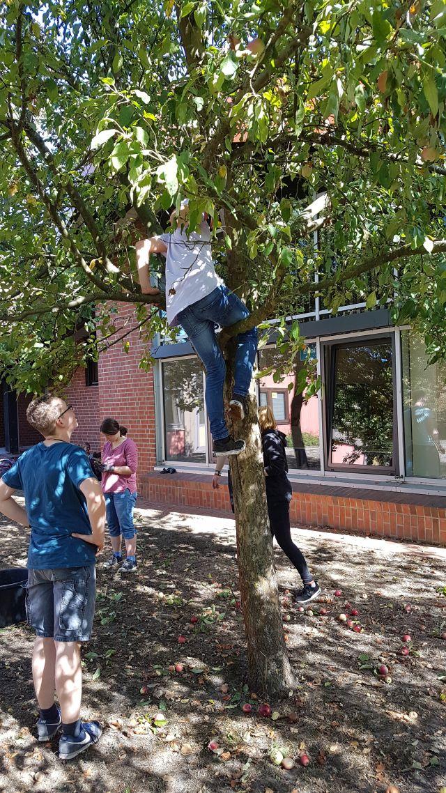 Rauf auf den Baum