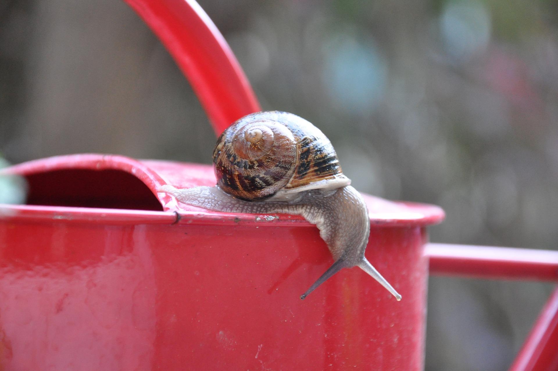 Escargot sur arrosoir