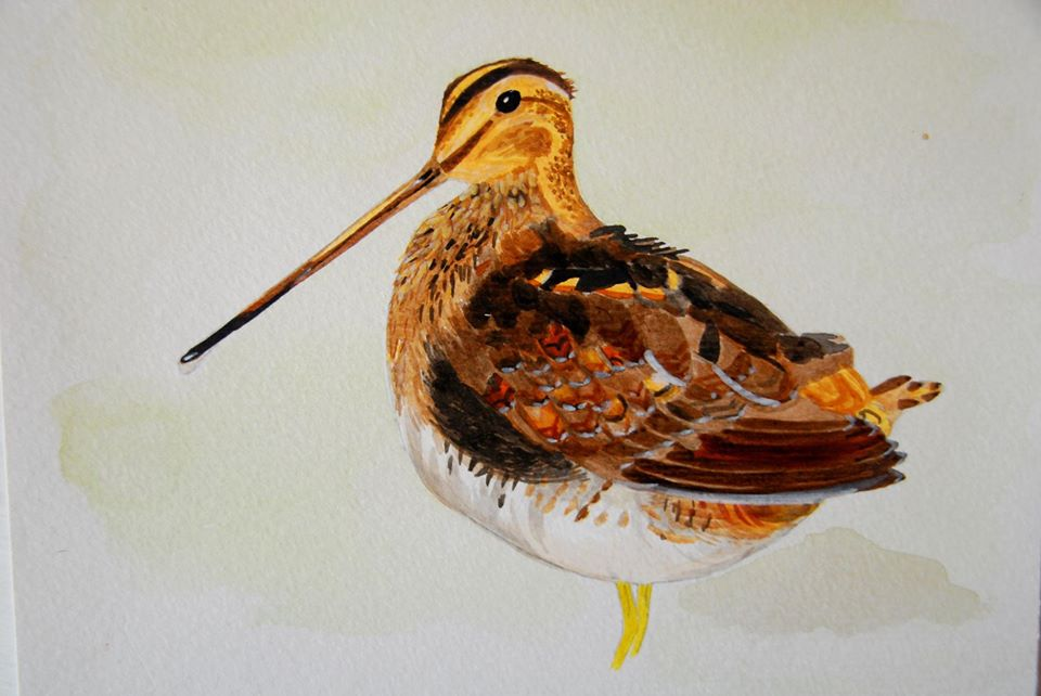 Bécassine des marais © Céline Verley