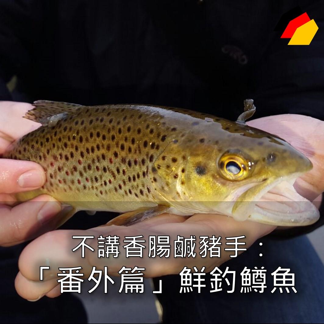 【德國飲食】不講香腸鹹豬手「番外篇」:鮮釣鱒魚