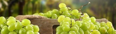 Witte wijnen zoeken en online bestellen
