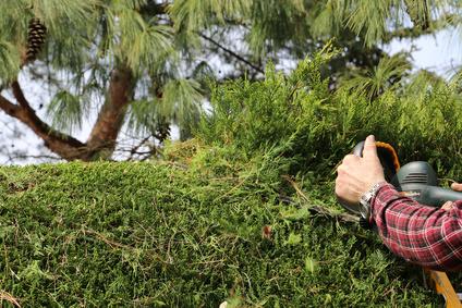 Grünflächenpflege und Gartenpflege