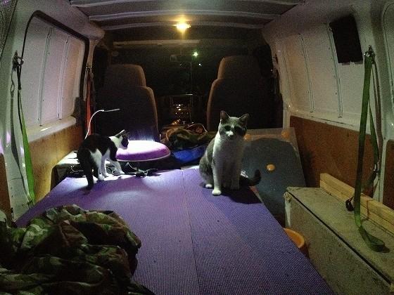 福岡南本店の猫たち