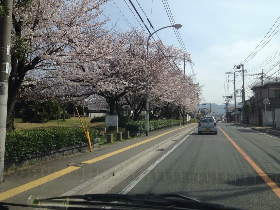 一昨年の福岡市南区長住の桜