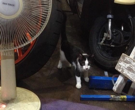 福岡南本店の新しい猫のタミ