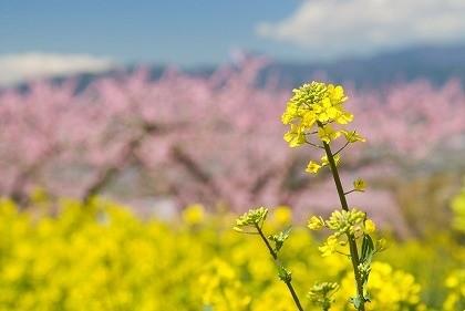 春 img