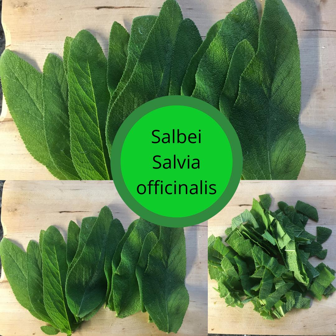 Salbei - Salvia officinalis