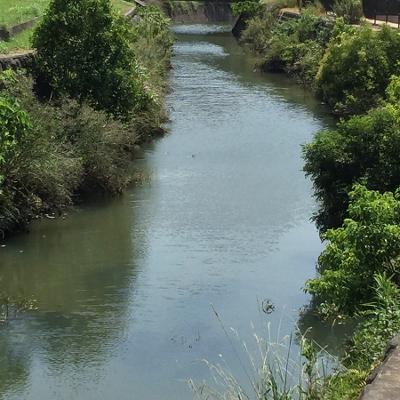 聖マリア学院大学脇に流れる金丸川