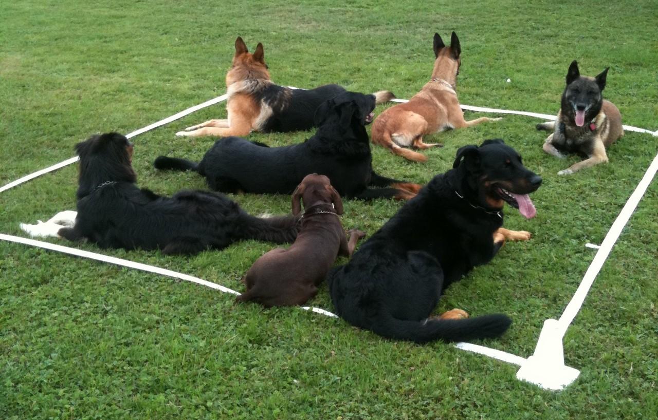 club canin dans les yvelines