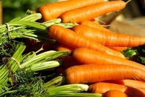 Optimale Ernährung - gesund - Möhren