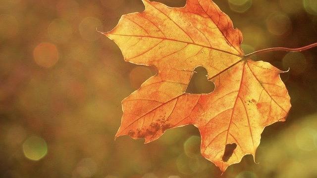 Herbststurm im Sommer