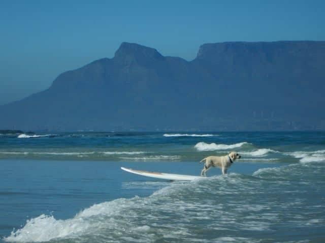 Foto aus fernen Landen von Roman Mick und seinem Hund