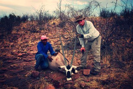 Dank unseres Fährtenlesers Lesley konnte die Nachsuch auf diese Oryx Kuh erfolgreich beendet werden. Danke an Lesley und das gesamte Team. Es ist immer sehr schade wenn angeschweistes Wild nicht gefunden wird.