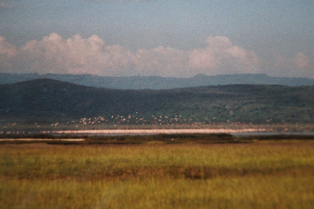 Lake Nakuru National Park: Flamingos am Horizont.