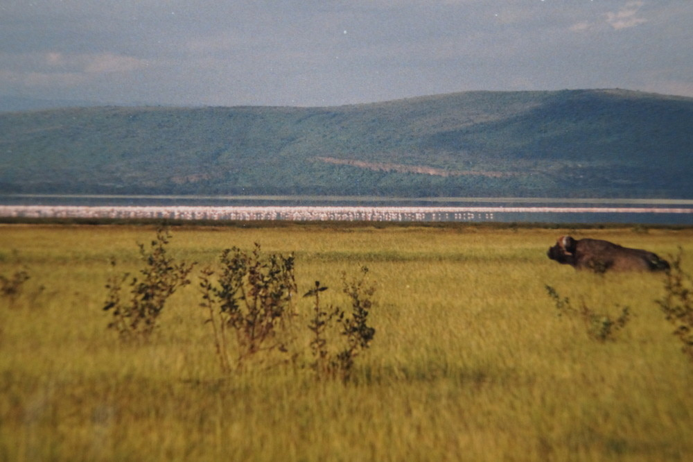 Lake Nakuru National Park. Out of Africa.