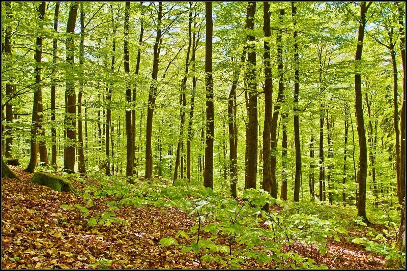 Lenas Wald