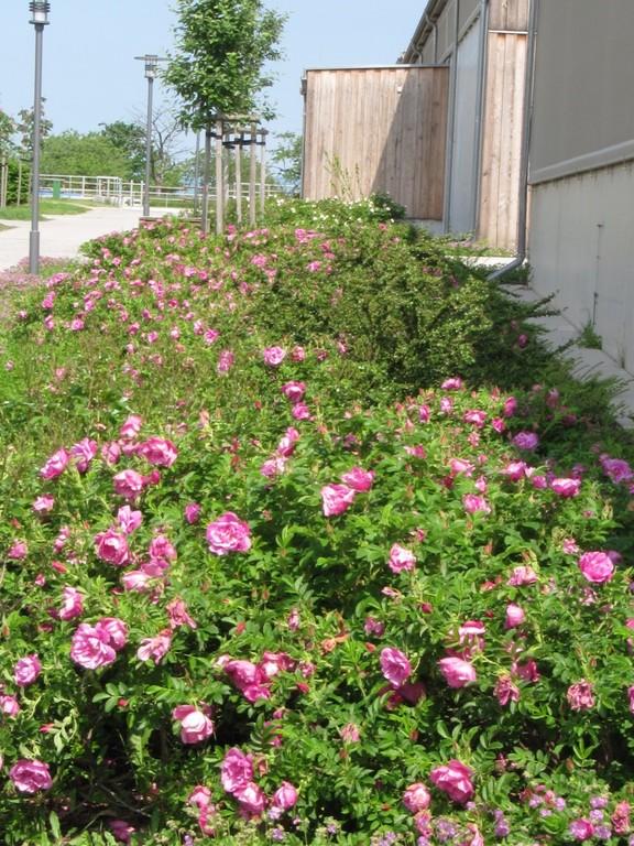 Blumenbeet vor den Reithallen