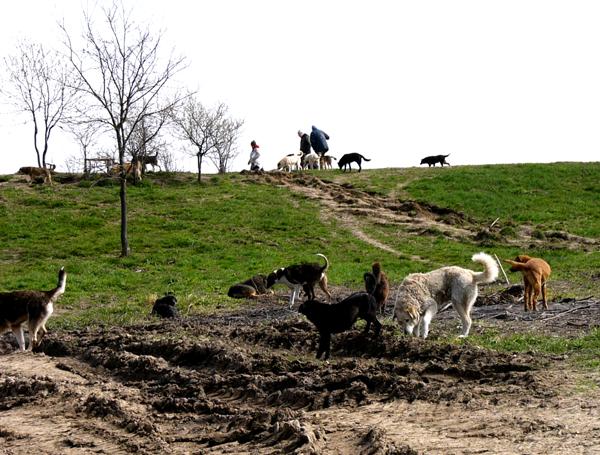 Geschichte: Rumänien Odai / Oradea / Bihor / Cornu