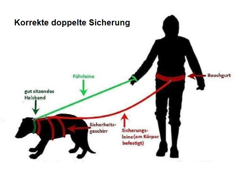 Sicherung von Hunden