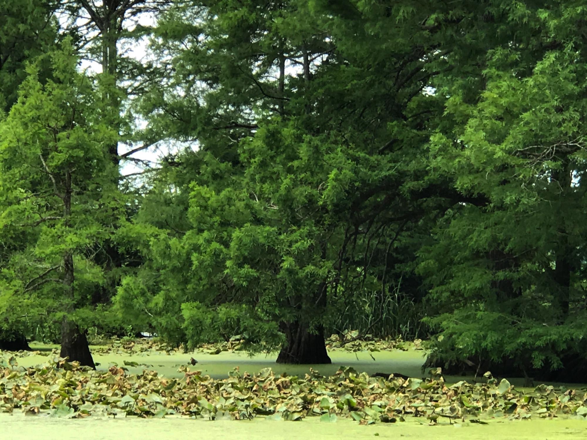 Reelfoot Lake TN